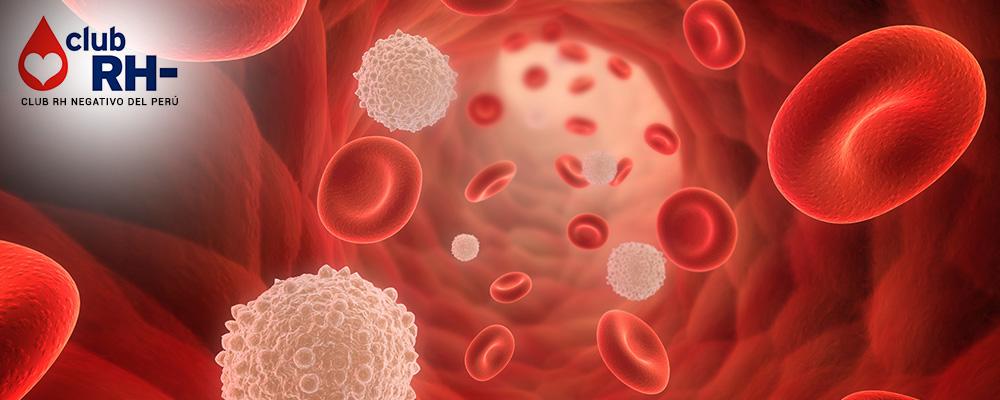 Todo sobre la sangre. En esta sección podrás conocer respuestas concretas sobre temas relacionados con la sangre, sus componentes, los grupos sanguíneos, dónde se forma la sangre y cuánta sangre tenemos los seres humanos. Información obtenida del Programa Nacional de Hemoterapia y Bancos de Sangre PRONAHEBAS.
